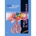 MAXI ATLAS 10 PIEL. GLANDULAS ENDOCRINAS
