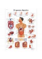 EL APARATO DIGESTIVO (VR-3422)