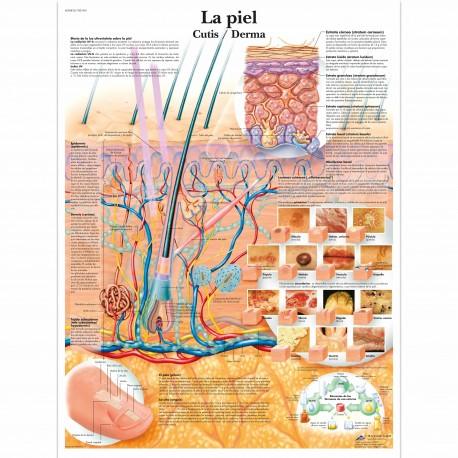 CANCER DE PIEL (VR-3295)