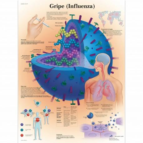 GRIPE (VR-3722)