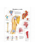 HOMBRO Y CODO (VR-3170)