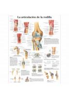 LA ARTICULACION DE LA RODILLA (VR-3174)